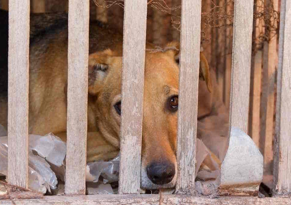 Aplicando nova lei, juiz condena homem a seis anos por maus-tratos a 25 cães